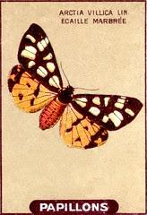 papill 15