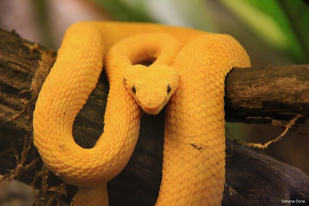 Smiling snake