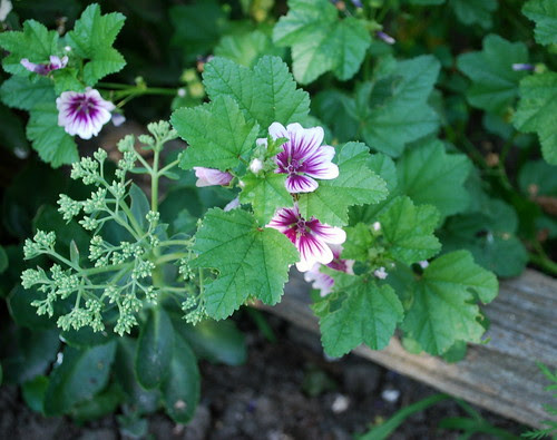 Watsons Farm flowers