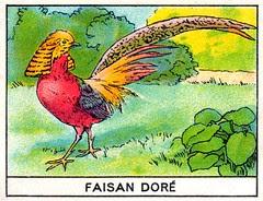 mart oiseaux112