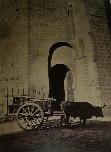 Bueyes en San Martín. The Hispanic Society of America. Foto Jean Laurent, 1874-92