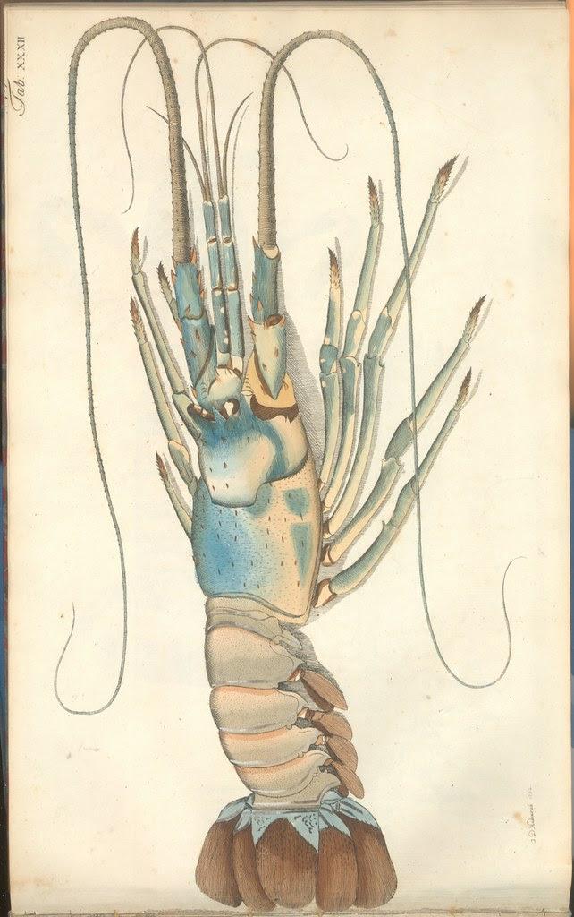 Versuch einer Naturgeschichte der Krabben und Krebse g