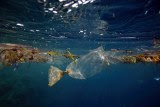 Plastics are a growing problem in our oceans