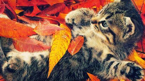 fall animal wallpaper  wallpapersafari