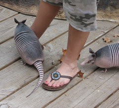 Armadillo Feet