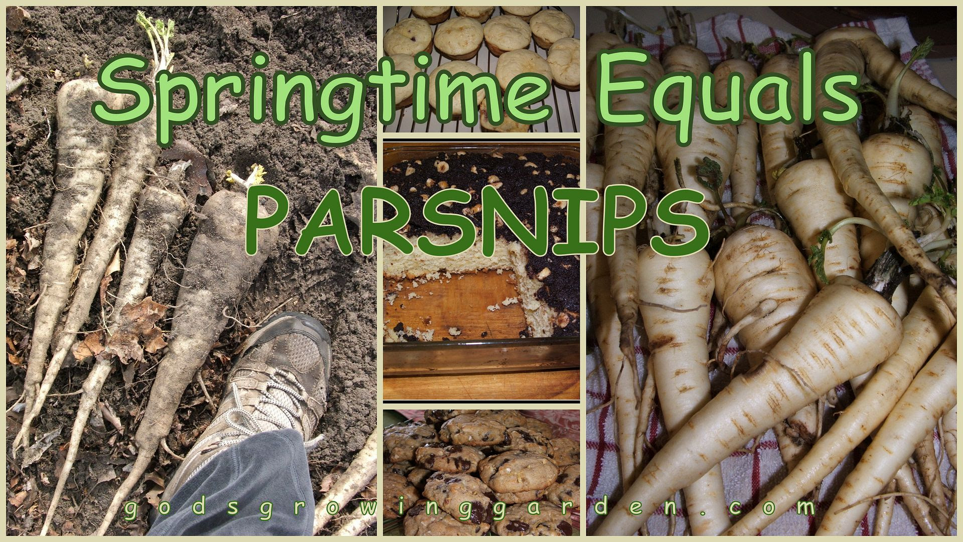 Parsnips by Angie Ouellette-Tower for godsgrowinggarden.com photo 2013-03-31_zpsa9b2b83e.jpg