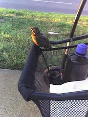 Bye Bye Birdie. . .no, really