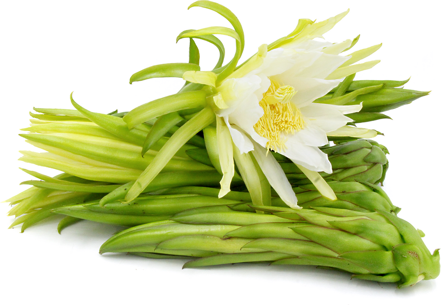 Dragon Fruit Flower Buds Information And Facts