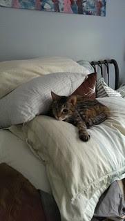 Maggie enjoying a pillow pile