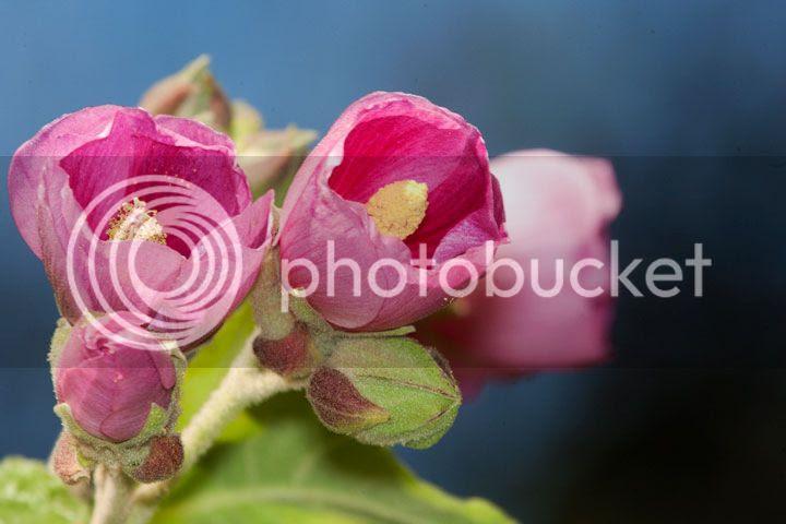 photo flores-lx_zps3bc5e15a.jpg