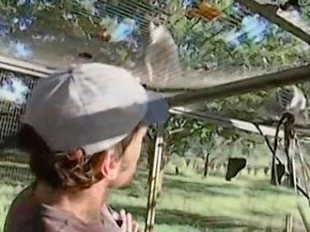 Monkey Caretaker