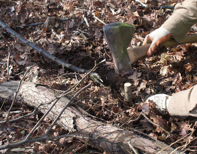 DSC_8162 layering a tree