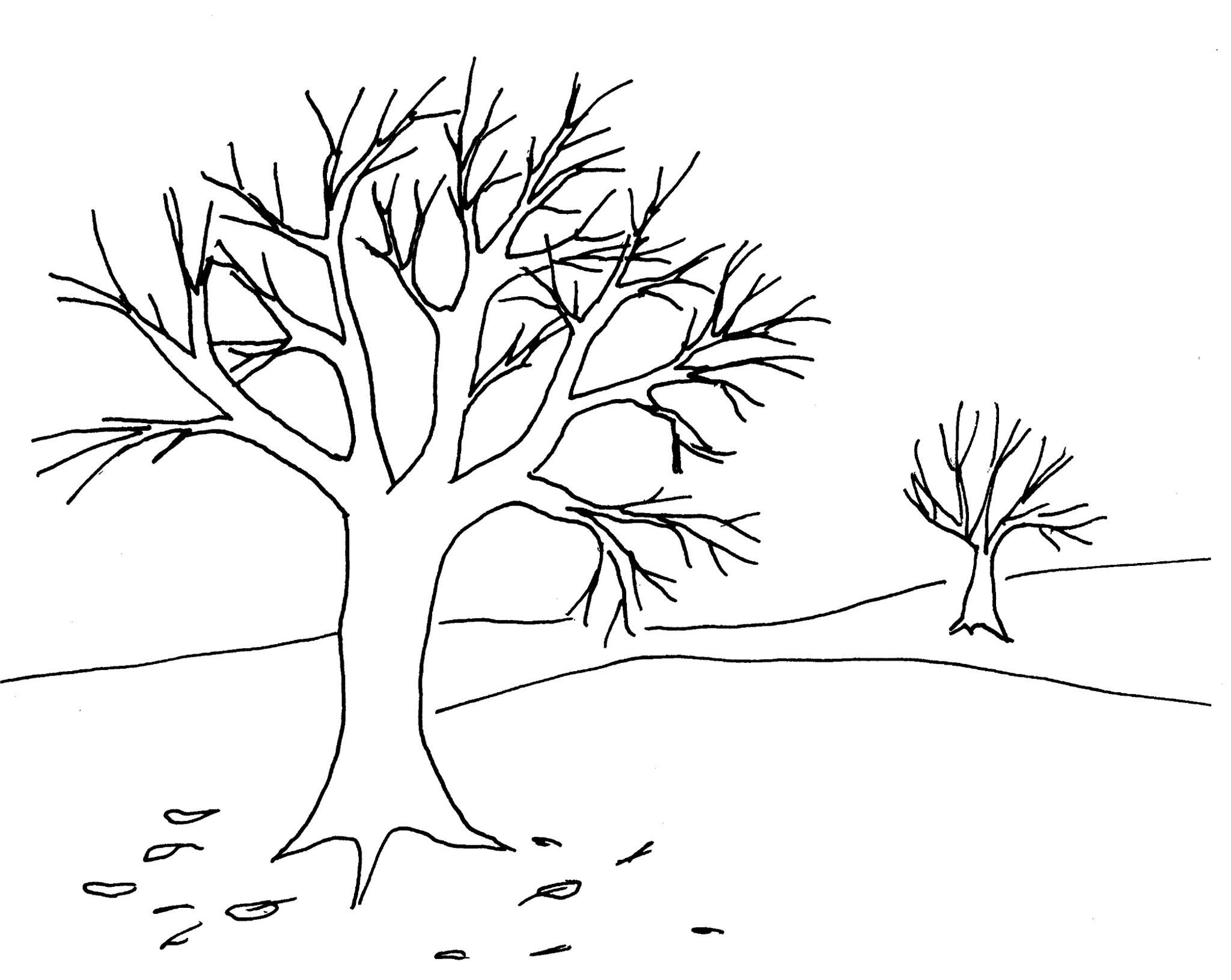 MA arbre