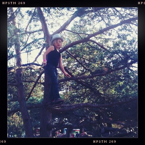 Hoog in de bomen