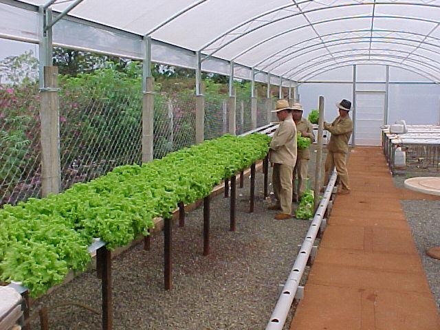 hidroponia es una buena opción para producir hortalizas de uso cotidiano en los hogares y contribuir a s fertilizantes químicos.