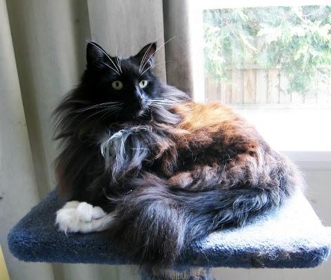 leg-stack-cat