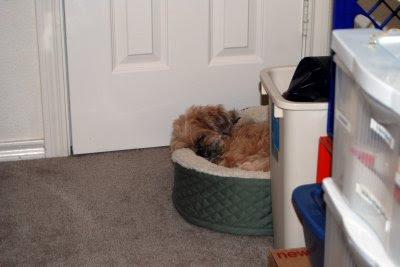 Sleepy Curled Bilbo