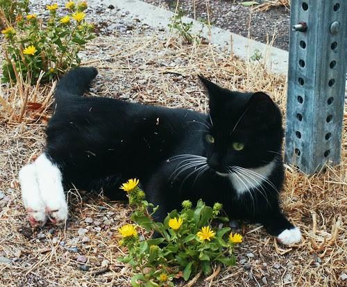 Cat, Flower & Metal