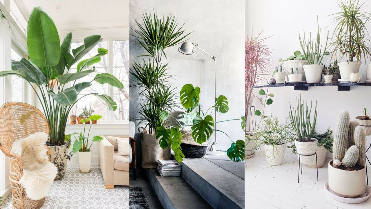 Decorate Living Room With Indoor Plants India Leadersrooms