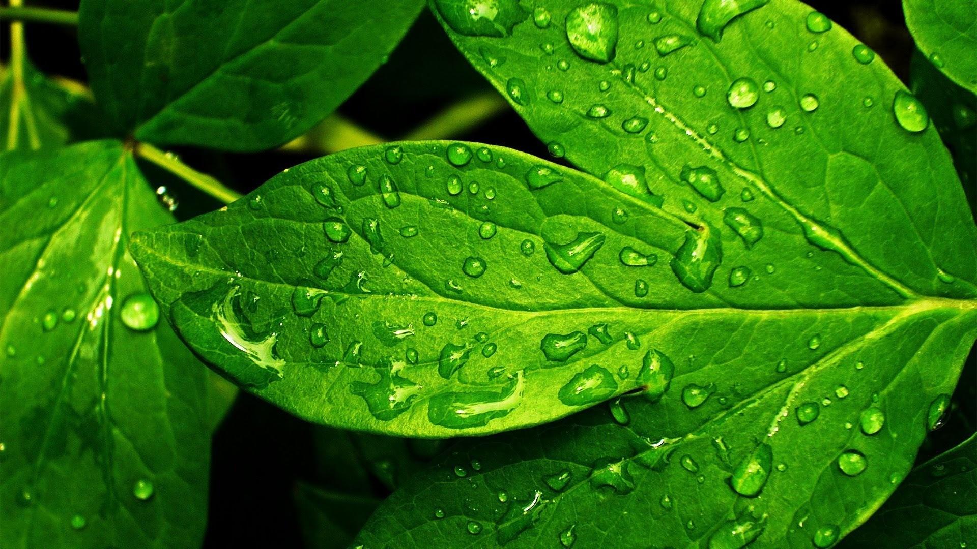 Beautiful Wallpaper Hd Green Leaf Wallpaper