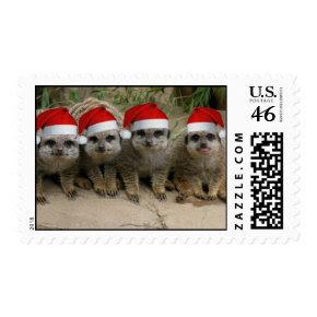 Christmas Meerkat Postage stamp