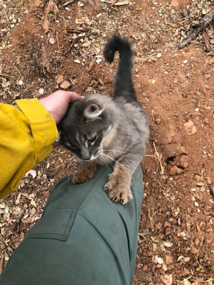 Firefighter Saves Cat From Wildfire In California, And Now She Can't Thank Him Enough