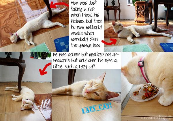Mao the lazy cat