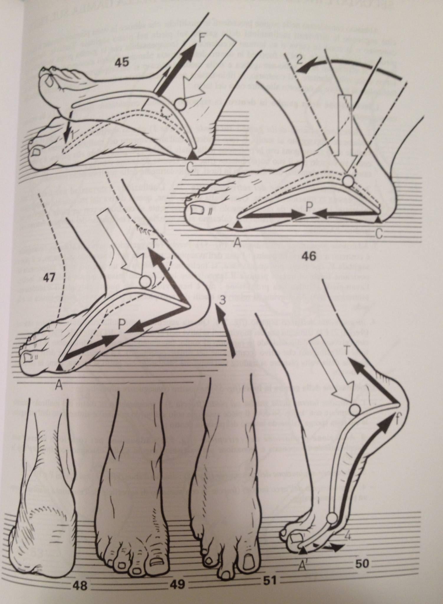 i tempi del cammino e del movimento del piede