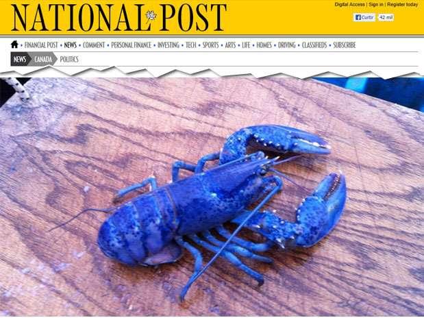 A coloração azul é causada por uma mutação genética: chance deuma em 2milhões Foto: National Post / Divulgação