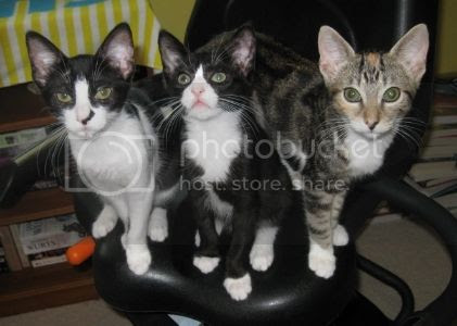 Katniss, Buster, Houdini. Don't be fooled by those cute little faces!