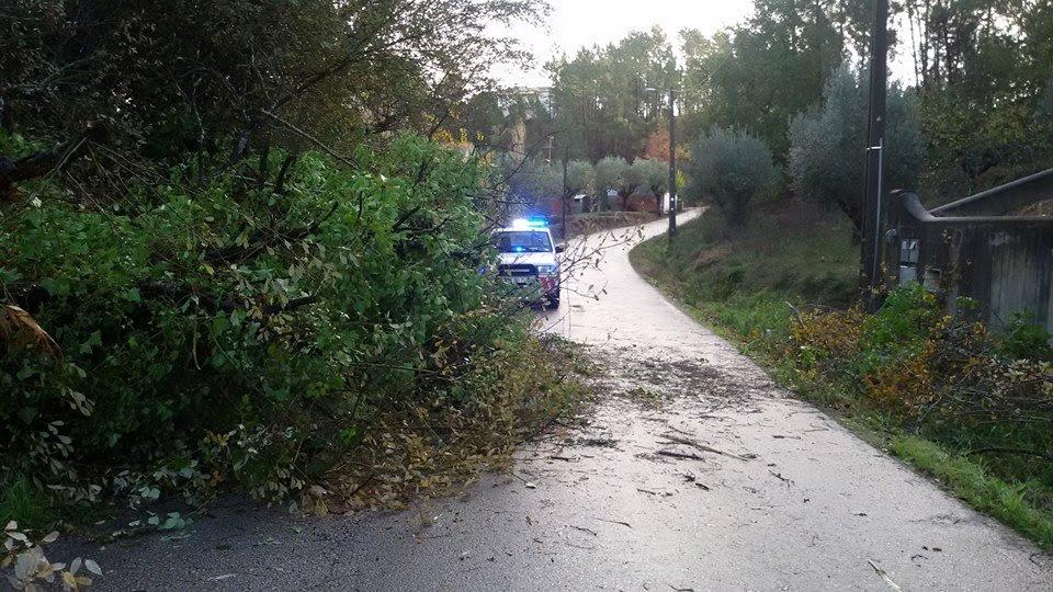 Resultado de imagem para Queda de árvore mata condutor em Ourém