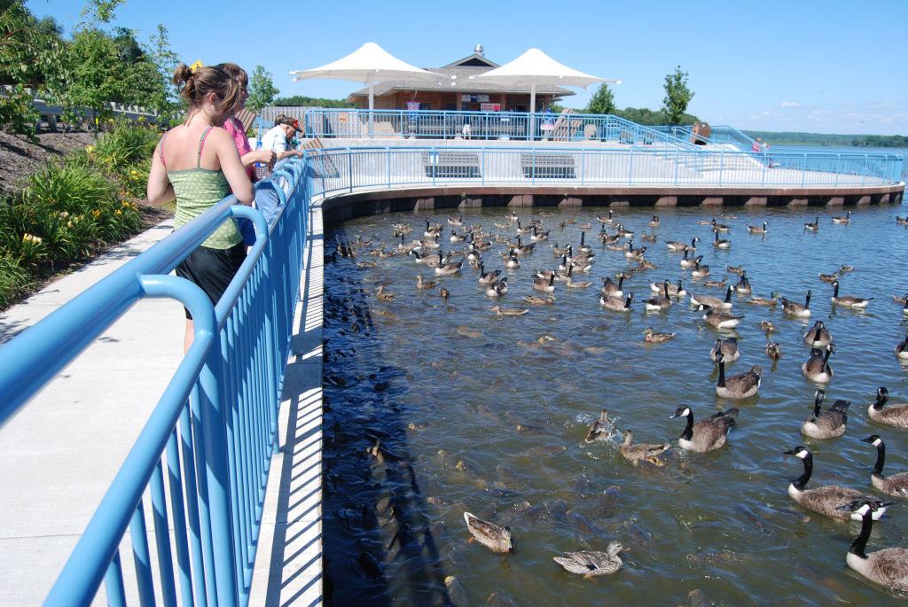 O vertedouro de Linesville: onde os patos caminham sobre peixes 01
