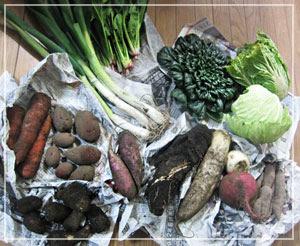 「ビオファームまつき」の正月野菜セット。こちらも壮観♪