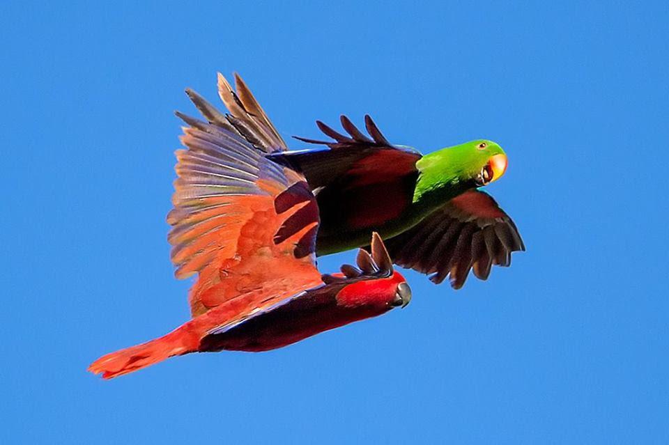 Unduh 1070+ Foto Gambar Burung Kakak Tua Terbang HD Paling Keren Gratis