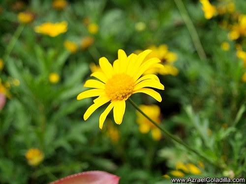 Panagbenga flower landscape contest at Burnham Park photos by Azrael Coladilla of Azraels Merryland Blog
