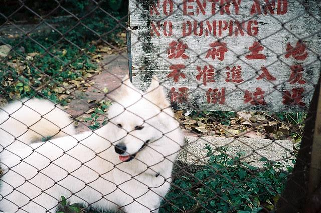 Dog in Wong Tai Si Minolta Hi-matic