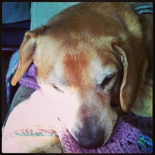 Good Sunday Morning! #dogstagram #morning #sunspot #Rescued #houndmix #adoptdontshop #ilovemydogs #instadog #lazySunday