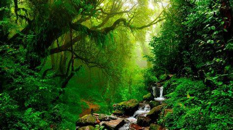 relaxing  flute gentle birds  rainforest sound