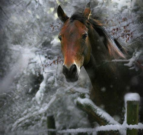 winter horses pictures wallpaper wallpapersafari