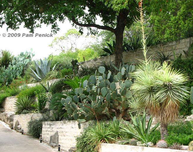 Going vertical: Jeff Pavlat's hillside Austin garden | Digging
