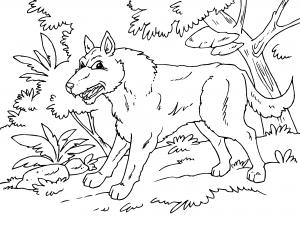 Dibujos De Animales Del Bosque Para Colorear Paracolorearnet