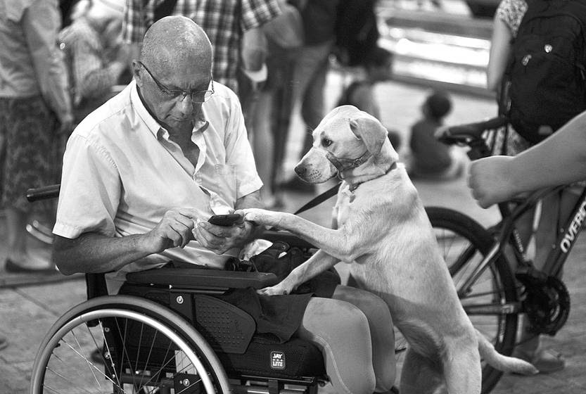 Gabriel Tate y su perra Blondie, el viernes en la explanada de la Intendencia de Montevideo, al llegar a la marcha por el Día Internacional de los Derechos de las Personas con Discapacidad. Foto: Federico Gutiérrez