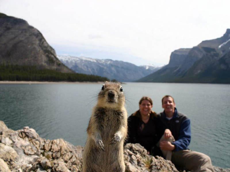 σκίουρος-photobomb-Banff
