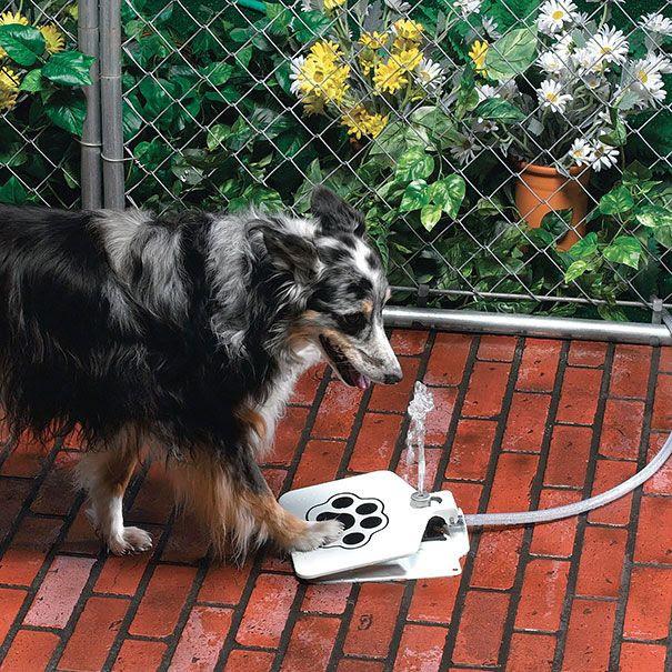 הפטריה | רעיונות למתנות יצירתיות ומגניבות לכלבים | סדרת תמונות