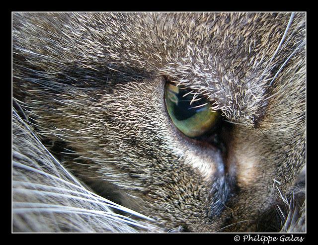 L'oeil du chat