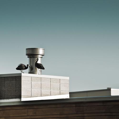 Design / architecture / birds / modern / building / house por Cuba Gallery