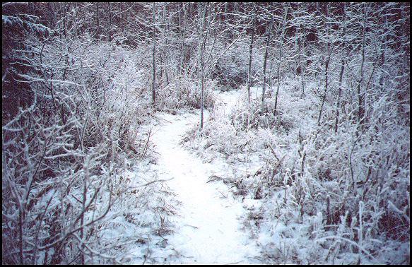 http://www.westerntour.com/otherAb/winter/wtrPathm.jpg