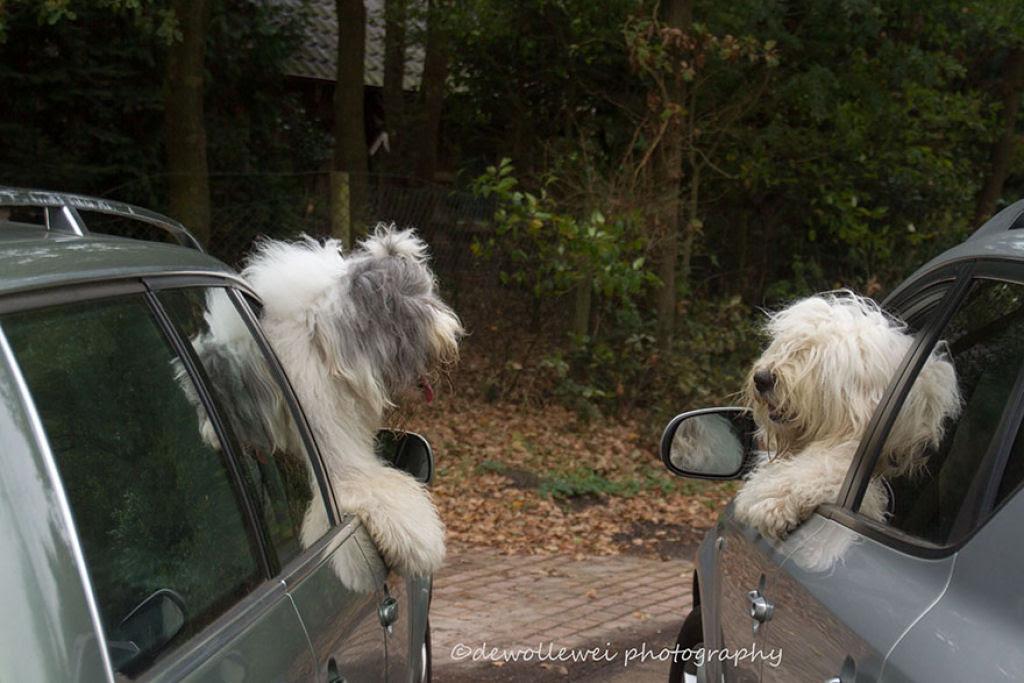 Estas fotogênicas irmãs bobtail fazem pose até para relâmpagos 19