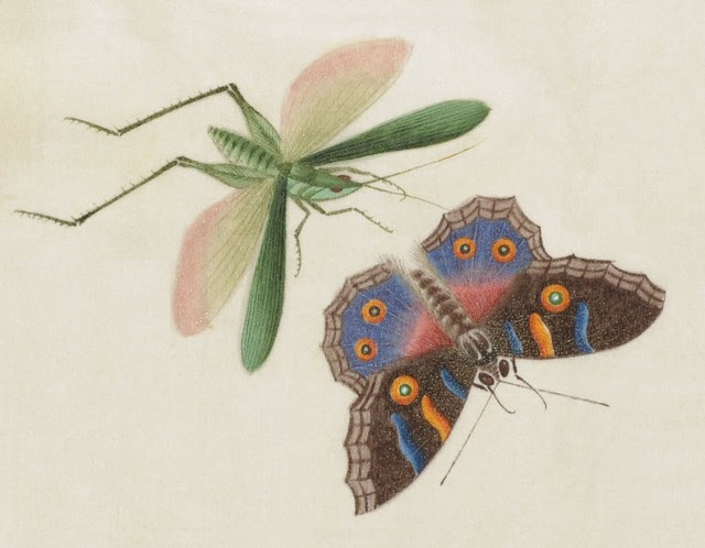 cricket and butterfly sketch - China 19th c.)