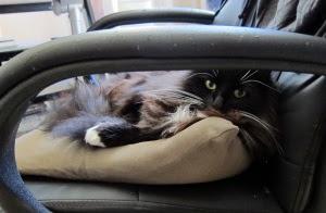recliner-cat